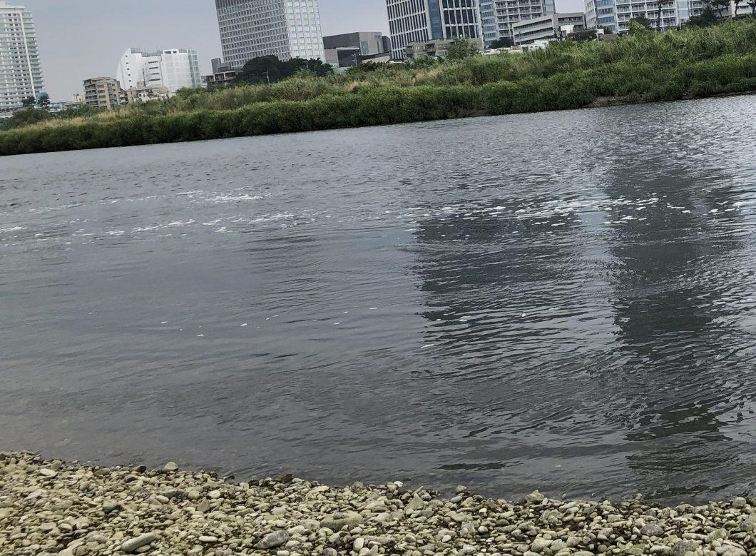 汚い多摩川